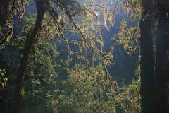 Ветви дерева покрытого мхом Стоковое Изображение RF