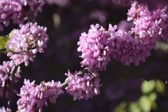 Ветви дерева покрытые с крошечными цветками Сезон весны зацветая стоковая фотография