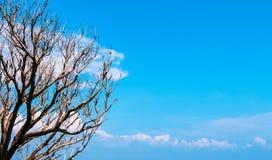 Ветви дерева против голубого неба с облаками Стоковые Фотографии RF