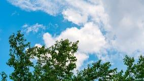 Ветви дерева против голубого неба Стоковые Фотографии RF