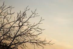 Ветви дерева против неба с облаками Стоковое Фото
