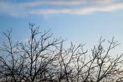 Ветви дерева против неба с облаками Стоковая Фотография