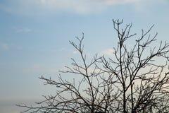 Ветви дерева против неба с облаками Стоковое Изображение RF