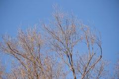 Ветви дерева против неба Стоковые Фото