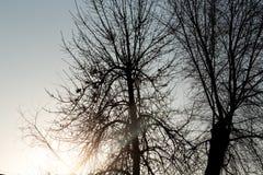 Ветви дерева против неба Стоковые Изображения