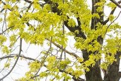 Ветви дерева против неба Стоковая Фотография