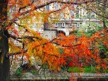 Ветви дерева против фона Vajdahunyad рокируют музей венгерского земледелия Стоковое фото RF