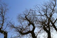 Ветви дерева с птицами гнездятся, осматриваются снизу Стоковое фото RF