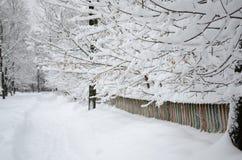 Ветви деревьев в снеге вдоль загородки стоковая фотография