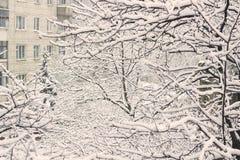 Ветви деревьев в снеге и падая снеге стоковые фотографии rf