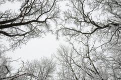 Ветви деревьев зимы Стоковая Фотография