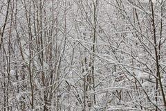 Ветви деревьев покрытые с снегом Стоковые Изображения