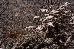 Ветви деревьев покрытых первым снегом зимы стоковое фото