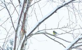 Ветви деревьев покрыты с заморозком и снегом На одном из деревьев сидит большая синица стоковая фотография