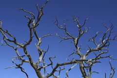 ветви достигают skyward Стоковое фото RF