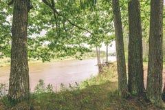 ветви дуба над рекой лета - винтажное влияние Стоковые Изображения RF