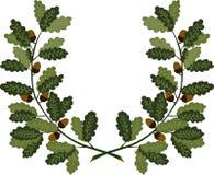 Ветви дуба бесплатная иллюстрация