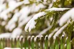 Ветви елей над загородкой со свежим белым снегом на их стоковые фотографии rf