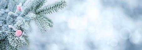 Ветви ели в зиме с плодом шиповника Стоковые Изображения RF