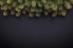 Ветви ели на темной предпосылке Стоковое Изображение RF