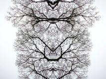Ветви дерева, абстрактная концепция Стоковая Фотография