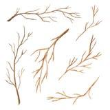 Ветви дерева акварели установленные для оформления иллюстрация вектора