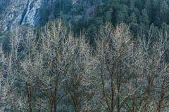 Ветви дерева без листьев в холодной температуре на Lachen в северном Сиккиме, Индии Стоковое фото RF