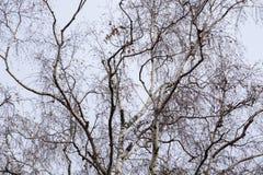Ветви дерева без листьев Стоковые Изображения