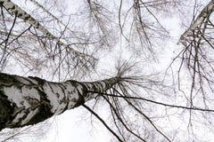 Ветви дерева без листьев Стоковая Фотография