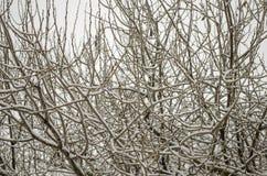 Ветви дерева без листьев Стоковое фото RF