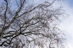Ветви дерева без листьев Стоковое Изображение