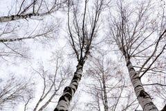 Ветви дерева без листьев Стоковые Фото