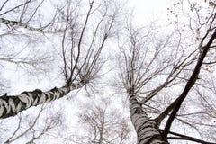 Ветви дерева без листьев Стоковые Изображения RF