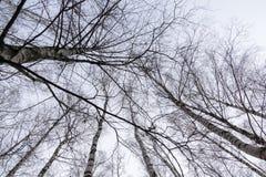 Ветви дерева без листьев Стоковое Фото
