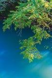 Ветви дерева березы Стоковые Фотографии RF