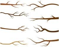 Ветви дерева Брайна без листьев Иллюстрация штока