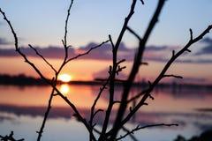 Ветви дерева в заходе солнца Стоковое фото RF