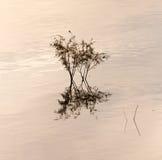 Ветви дерева в озере на заходе солнца Стоковая Фотография RF