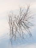 Ветви дерева в озере на заходе солнца Стоковое Изображение