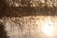 Ветви дерева в озере на заходе солнца Стоковые Изображения RF