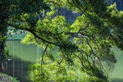 Ветви дерева в озере Стоковое Изображение RF