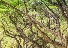 Ветви дерева в парке Стоковое фото RF