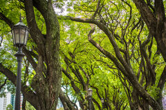 Ветви дерева в парке Shevelev Стоковое Фото