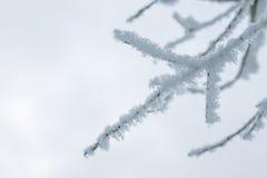 Ветви дерева в снеге Стоковые Изображения RF