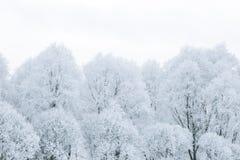 Ветви дерева в снеге Стоковое фото RF