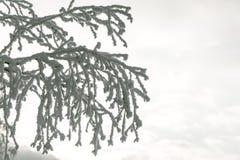 Ветви дерева в снеге Стоковая Фотография RF