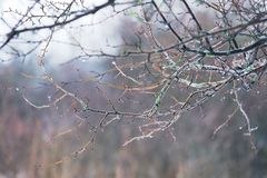 Ветви дерева в тумане Стоковые Фото