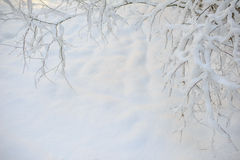Ветви дерева зимы белые на предпосылке снега в wintertime Стоковая Фотография