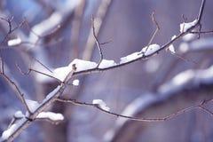 Ветви дерева зимы покрытые с снегом Замороженная ветвь дерева в лесе зимы Стоковое фото RF