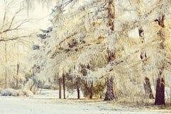 Ветви дерева зимы покрытые с снегом Стоковая Фотография RF